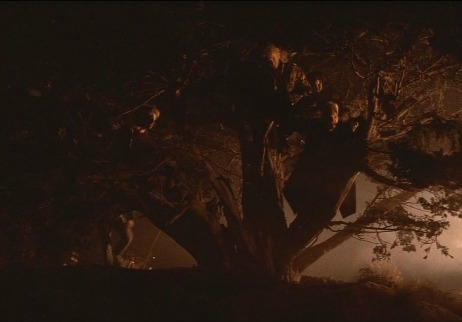 The Lost Boys Tree